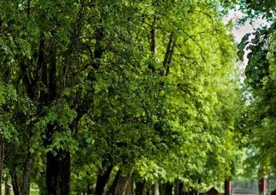 Juodas kabroletas medžių alėjoje su jaunavedžiais